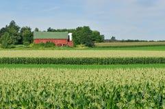 Celeiro no campo de milho Imagem de Stock