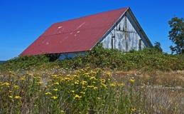 Celeiro rústico com videiras e wildflowers do verão imagens de stock