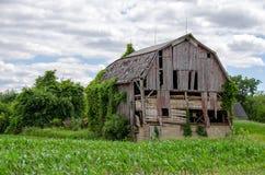 Celeiro resistido de Michigan no campo de milho Imagem de Stock Royalty Free