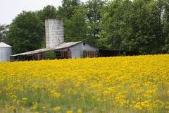 Celeiro, silo, e flores amarelas 2019 imagem de stock