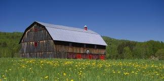 Celeiro velho bonito com portas vermelhas em um campo dos dentes-de-leão fotografia de stock