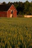 Celeiro vermelho velho do país Foto de Stock