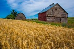 Celeiros abandonados Imagem de Stock