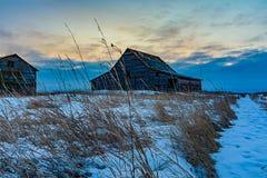 Celeiros na deterioração na paisagem da pradaria do inverno Imagens de Stock Royalty Free