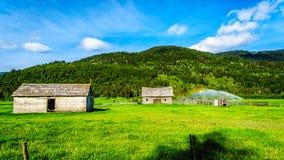 Celeiros velhos ao longo da estrada da angra de Heffley-Louis dentro BC, Canadá Foto de Stock