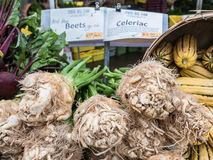 Celeriac, beets, and squash in labeled display at Corvallis Farm Royalty Free Stock Photography