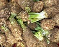Celeriac (celery roots) Royalty Free Stock Photography