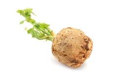 Celeriac Stock Images