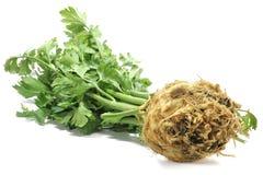 Celeriac. Isolated on white background stock image