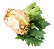 Celeriac isolated on white Royalty Free Stock Images