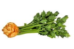 Celeriac på vit Arkivfoto