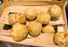 Celeriac roots vegetables in supermarket as food background. Retail. Celeriac roots healthy vegetables in broken wooden box as food background. Supermarket Royalty Free Stock Photo