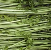 Celeries Foto de Stock