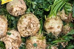 Celeries verts et beiges Image stock