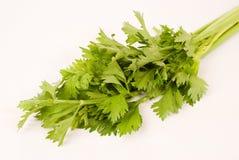 Celery. On the white background stock photo