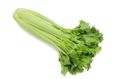 Celery. Bunch isolated on white Royalty Free Stock Photo