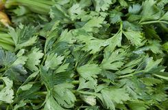 Celery. Fresh celery for sale at farmers market Royalty Free Stock Photography