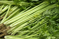 Celery. The backrgound of fresh celery Royalty Free Stock Photo