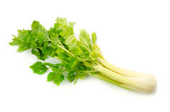 Celery Stock Photos
