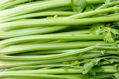 Celery Royalty Free Stock Images