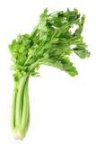 Celery. Bunch of Celery on White Background Stock Image