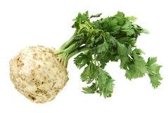 Celery Royalty Free Stock Photos