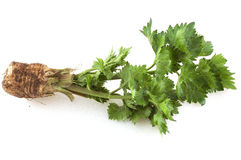 Celery. Isolated on the white Royalty Free Stock Photography