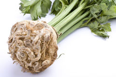 Celery. Detail of celery root plant on white background Royalty Free Stock Images