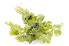Celery Royalty Free Stock Photography