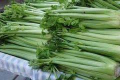 Celery, Apium graveolens var. dulce Stock Photography