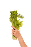 Celery bunch in a hand Stock Images