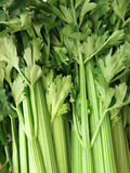 Celery Royalty Free Stock Image