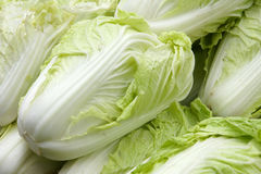 Celery cabbage. The close-up of celery cabbage(Chinese cabbage Stock Photo