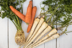 Celery, carrot and parsley Royalty Free Stock Images