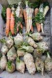 Celery, carrot, parsnip Stock Image