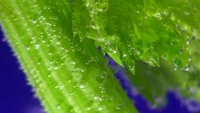 Celery in the water. Celery closeup in water bubbles macro fresh vegetable stock video footage