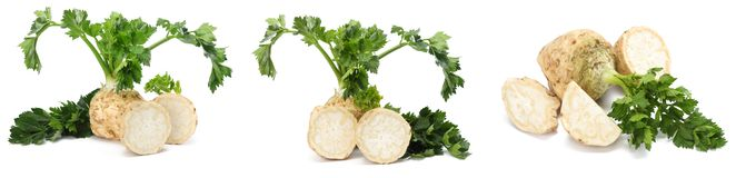 celery collection. celery root with leaf isolated on white background. Celery isolated on white. Healthy stock images