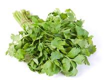 Celery fresh herb. Celery fresh green herb bunch on white stock image
