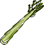 Celery illustration Stock Images