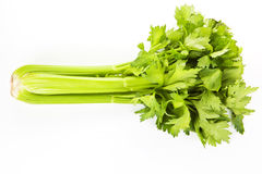 Celery isolated. Delicious healthy celery isolated over white background. Natural aphrodisiac stock photography