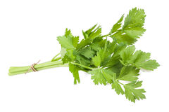 Celery Royalty Free Stock Photos