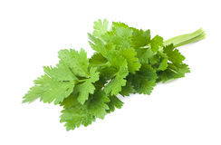Celery Royalty Free Stock Photography
