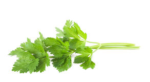 Celery. Isolated on white background Stock Images