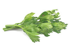 Celery leaf Royalty Free Stock Photos