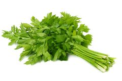 celery leaf isolated on white background. Celery isolated on white. Healthy food stock photography