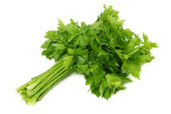 Celery leaf isolated on white background. Celery isolated on white. Healthy food royalty free stock images