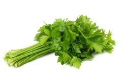Celery leaf isolated on white background. Celery isolated on white. Healthy food stock photo