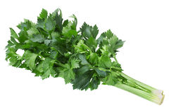 Celery leaf on white Royalty Free Stock Photography