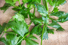 Celery Leaves. Fresh and green celery leaves and stalks stock photo