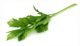 Celery leaves Royalty Free Stock Photos